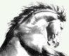 Écuries Dortet – Centre Équestre, pensions, cours et formations à Ozoir-la-Ferriere Logo